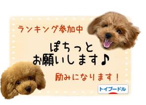 ブログ村「といぷねっと」トイ・プードルランキングバナー